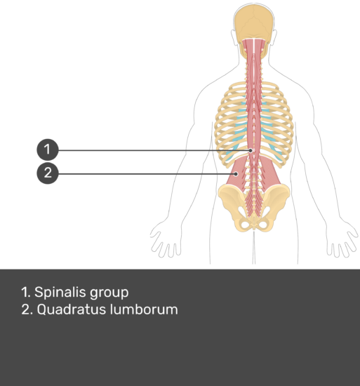 Quadratus lumborum manual muscle test